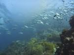 Sail Rock Szenerie mit Großaugenmakrelen