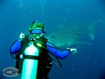 Tine und ein Walhai am Sail Rock