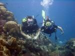 Gutes Tauchen im Marine Park mit Chaloklum Diving