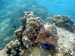 Koh Tao : Korallen, Anemonen und Weihnachtsbaumwürmer