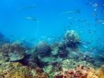 Unterwasserlandschaft bei Koh Ma, Koh Phangan