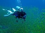 Auf einem PADI Multilevel Tauchgang am Sailrock im Golf von Thailand