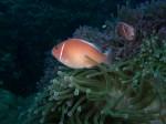 PADI Digitale U/W Fotografikkurs mit Chaloklum Diving